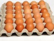 Куриное яйцо крупный опт