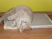 Супер-когтеточки для кошек.