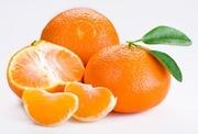 купим мандарин оптом