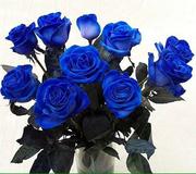 Синие розы от 200 руб./шт.