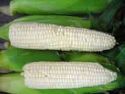 Белая кукуруза: зерно,  крупа,  мука.