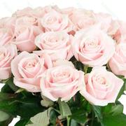 Розы Эквадор цена антикризисная.